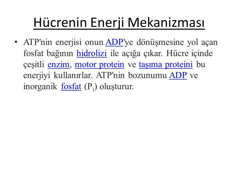 Hücrenin Enerji Mekanizması