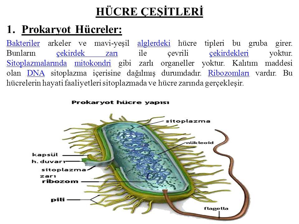 HÜCRE ÇEŞİTLERİ Prokaryot Hücreler: