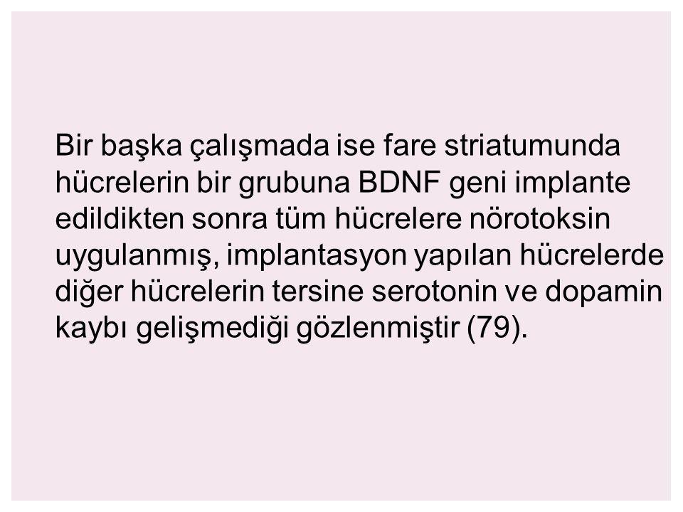Bir başka çalışmada ise fare striatumunda hücrelerin bir grubuna BDNF geni implante edildikten sonra tüm hücrelere nörotoksin uygulanmış, implantasyon yapılan hücrelerde diğer hücrelerin tersine serotonin ve dopamin kaybı gelişmediği gözlenmiştir (79).
