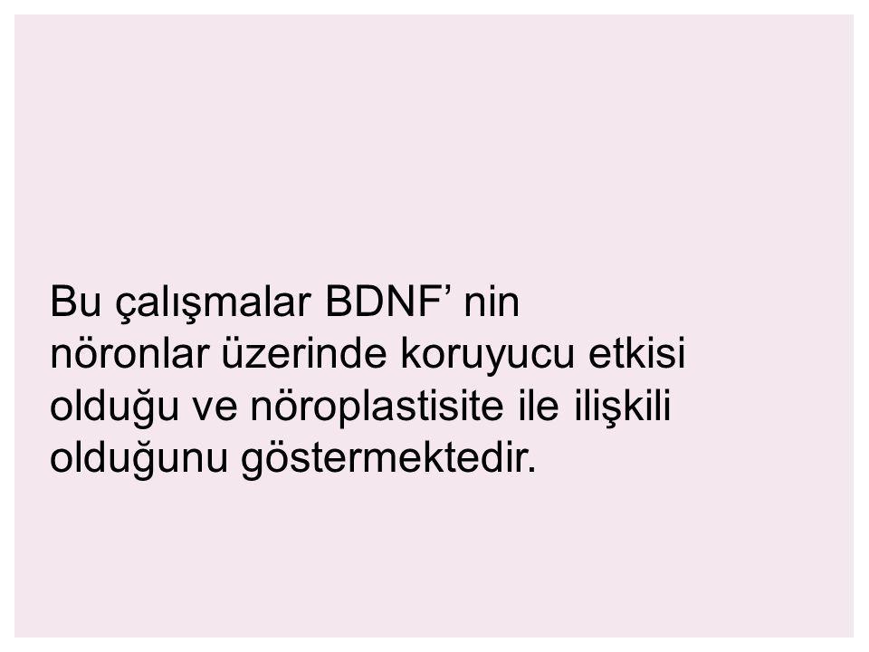 Bu çalışmalar BDNF' nin