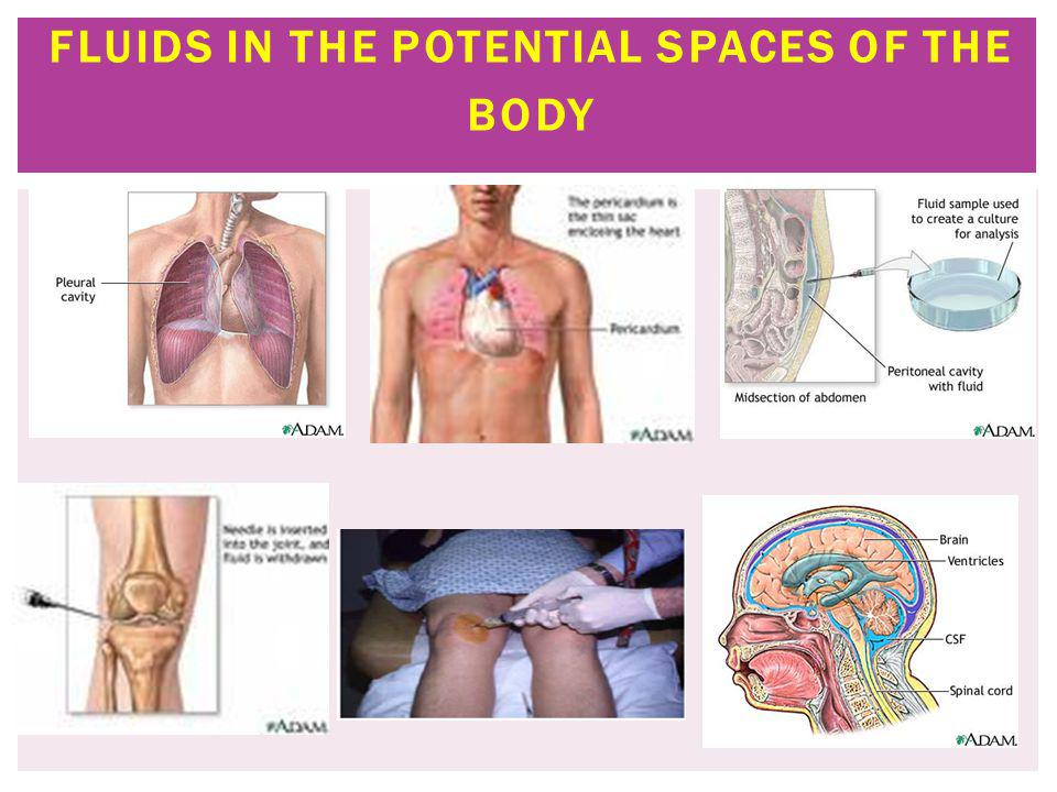Fluids in the Potential Spaces of the Body