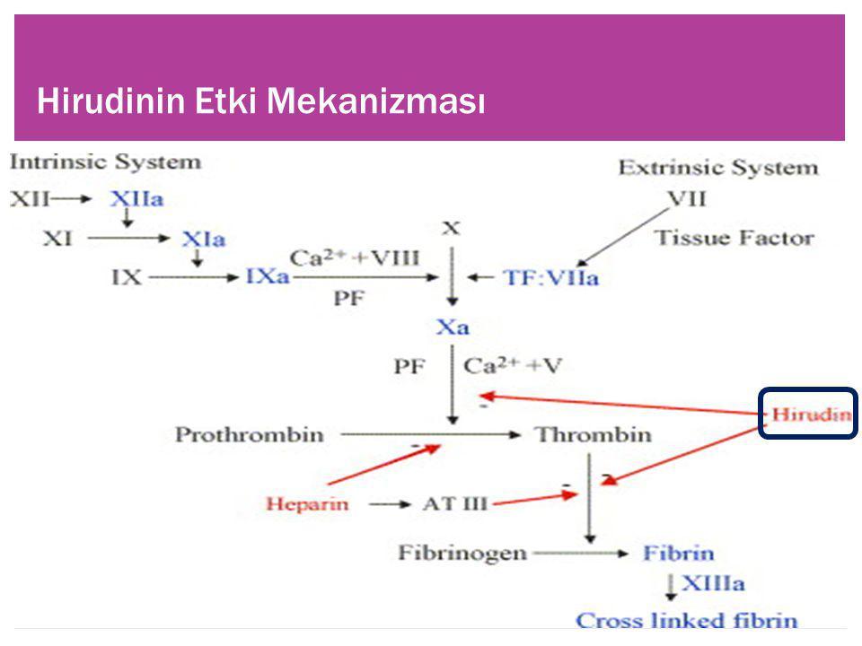 Hirudinin Etki Mekanizması