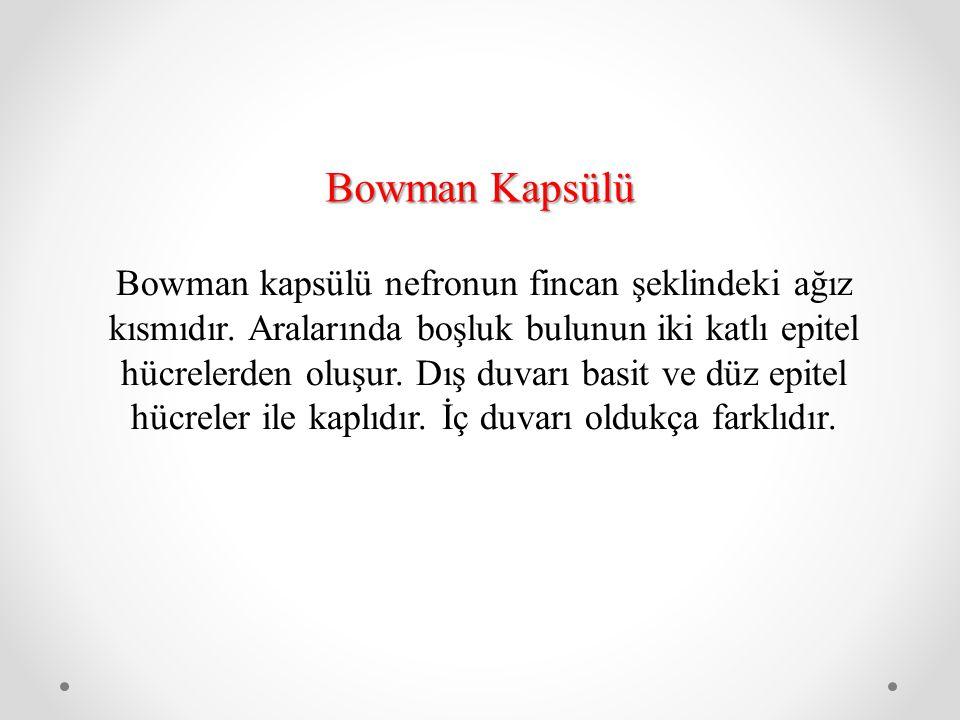 Bowman Kapsülü