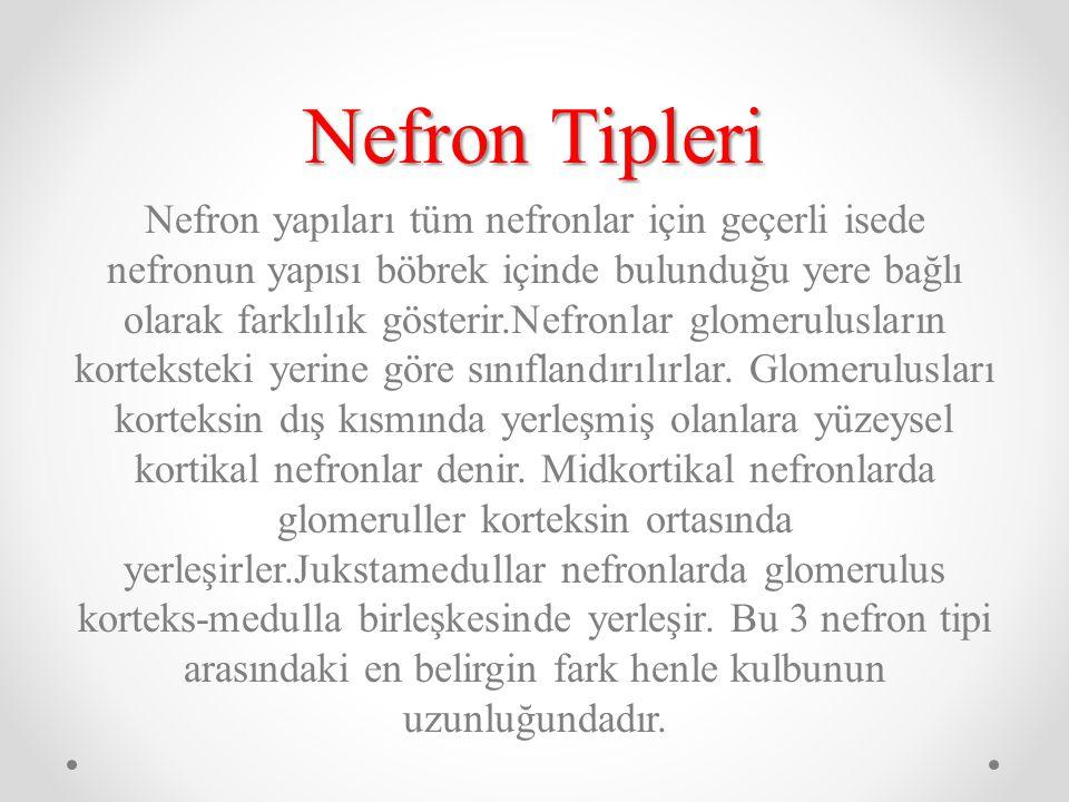 Nefron Tipleri