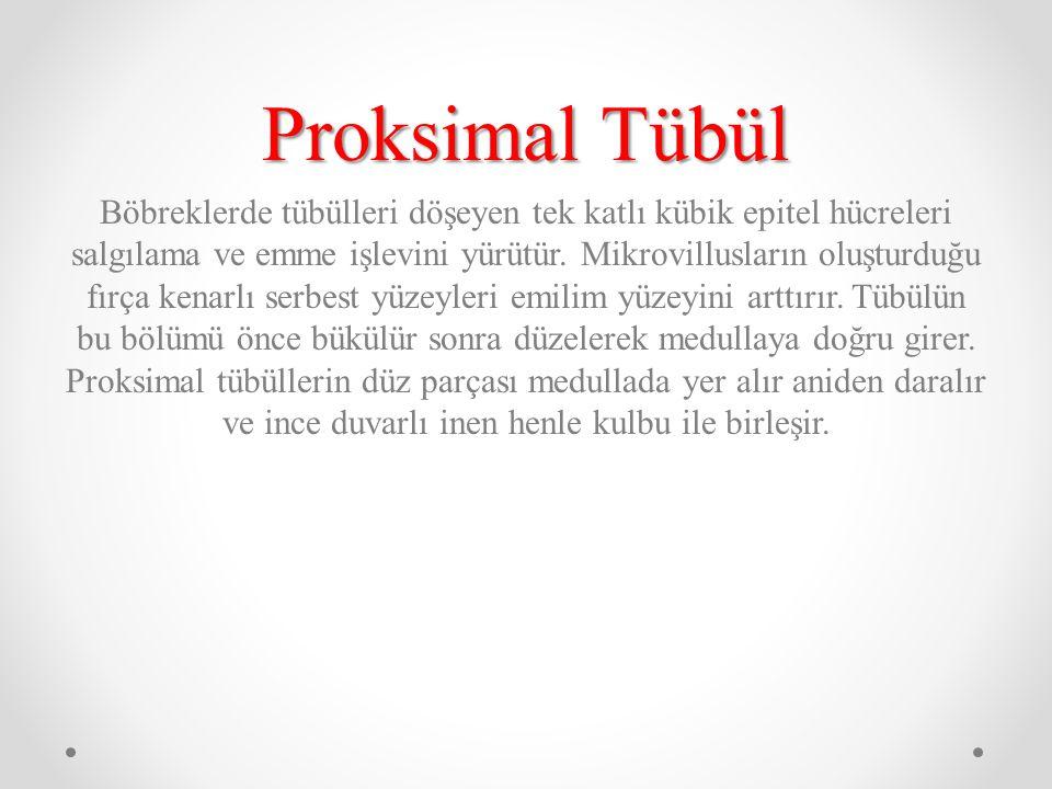 Proksimal Tübül