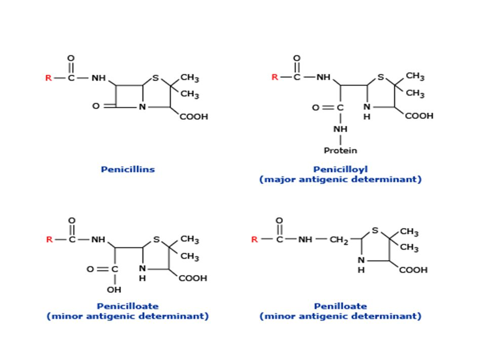 Penisilin vücuda girdikten sonra %95'i proteinlerin lizin aminoaiti ile birleşerek peniciloil determinantı oluşur.