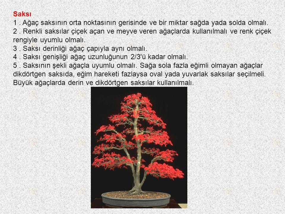 Saksı 1 . Ağaç saksının orta noktasının gerisinde ve bir miktar sağda yada solda olmalı.