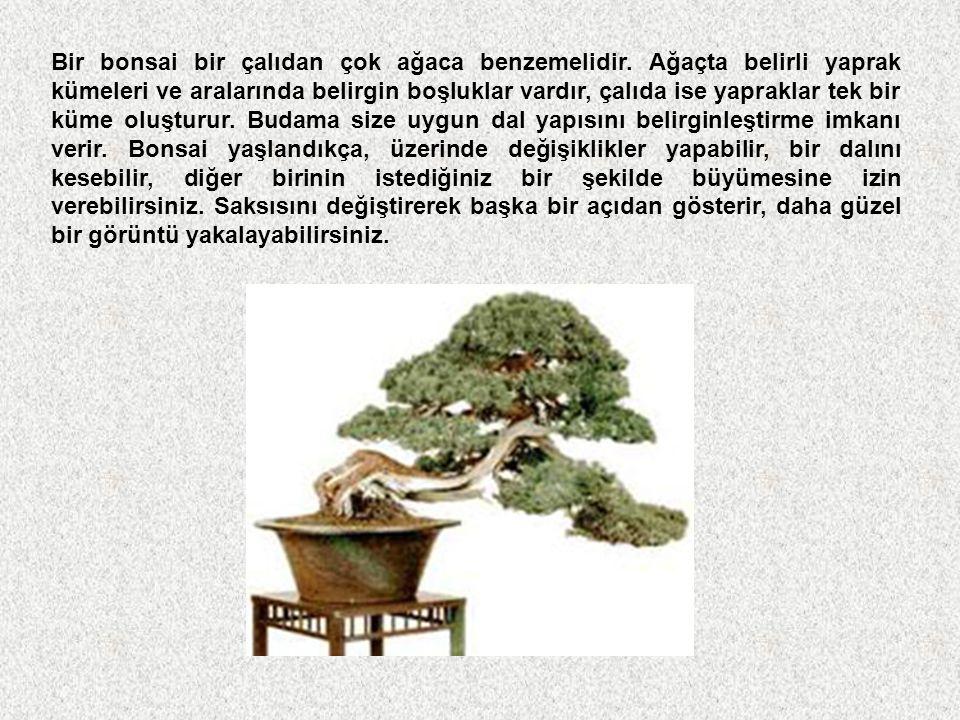 Bir bonsai bir çalıdan çok ağaca benzemelidir