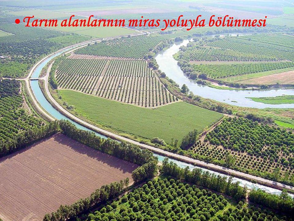 Tarım alanlarının miras yoluyla bölünmesi