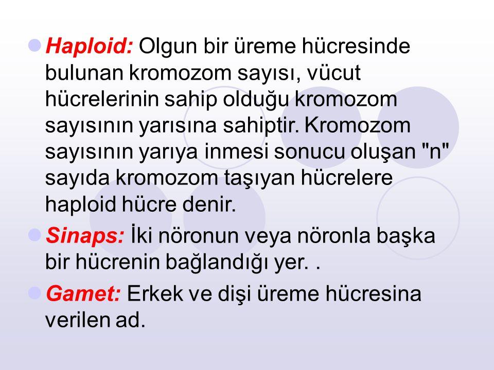 Haploid: Olgun bir üreme hücresinde bulunan kromozom sayısı, vücut hücrelerinin sahip olduğu kromozom sayısının yarısına sahiptir. Kromozom sayısının yarıya inmesi sonucu oluşan n sayıda kromozom taşıyan hücrelere haploid hücre denir.