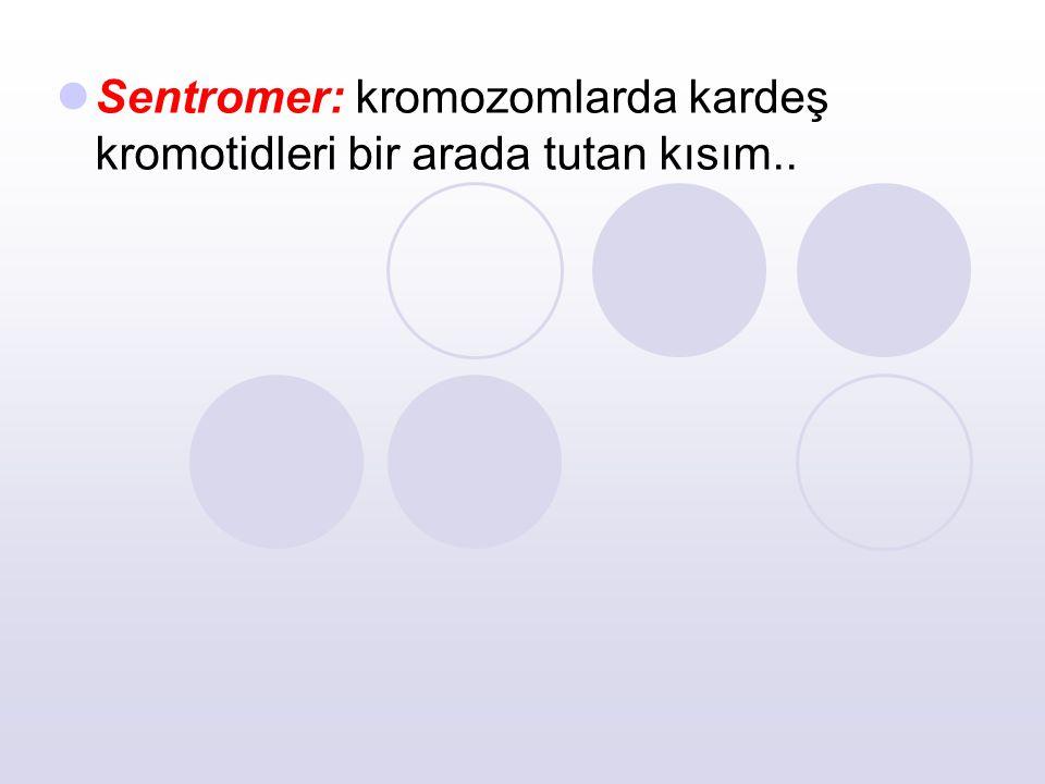 Sentromer: kromozomlarda kardeş kromotidleri bir arada tutan kısım..