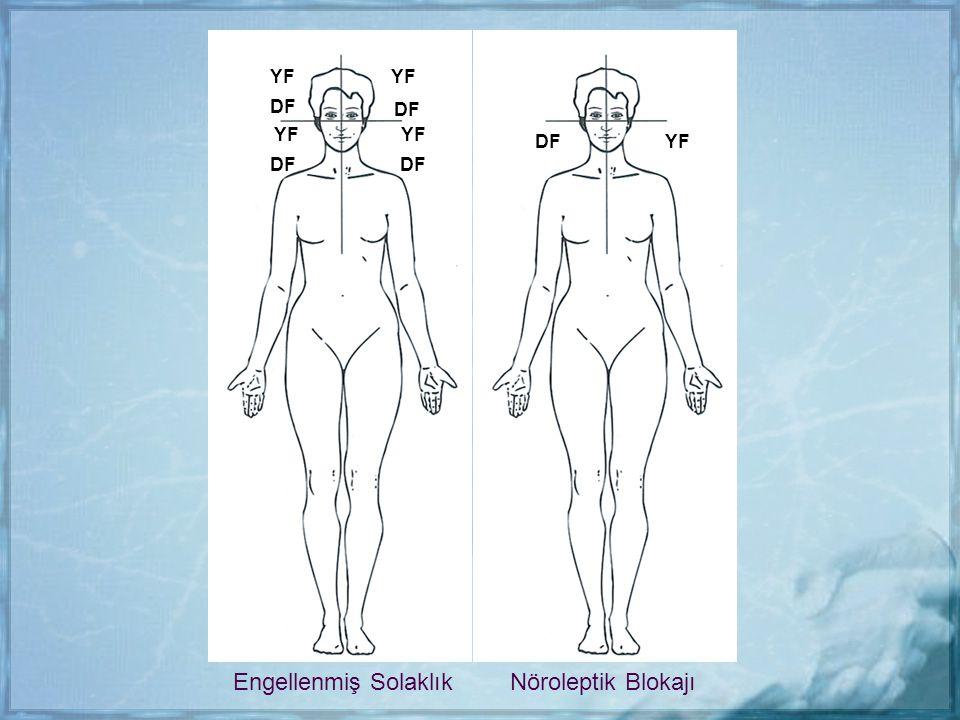 YF YF DF DF YF YF DF YF DF DF Engellenmiş Solaklık Nöroleptik Blokajı