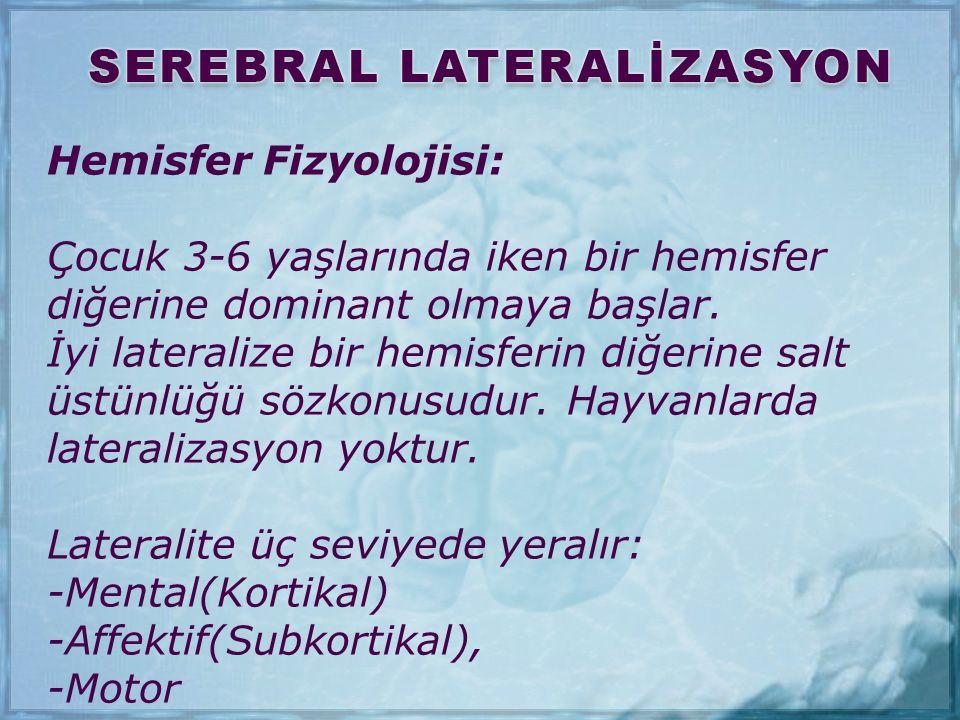 Hemisfer Fizyolojisi: