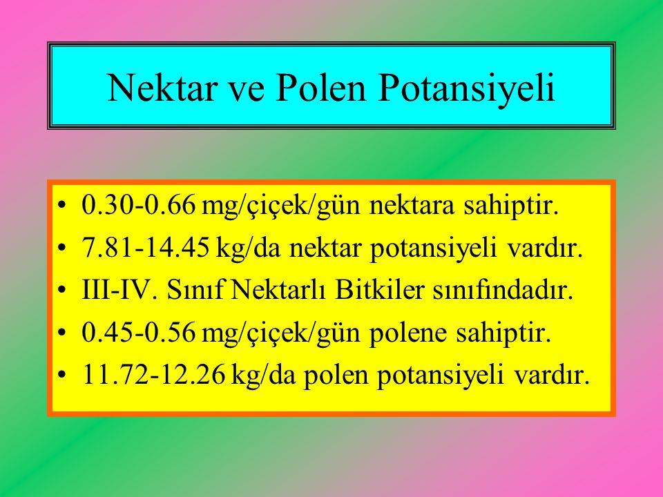 Nektar ve Polen Potansiyeli