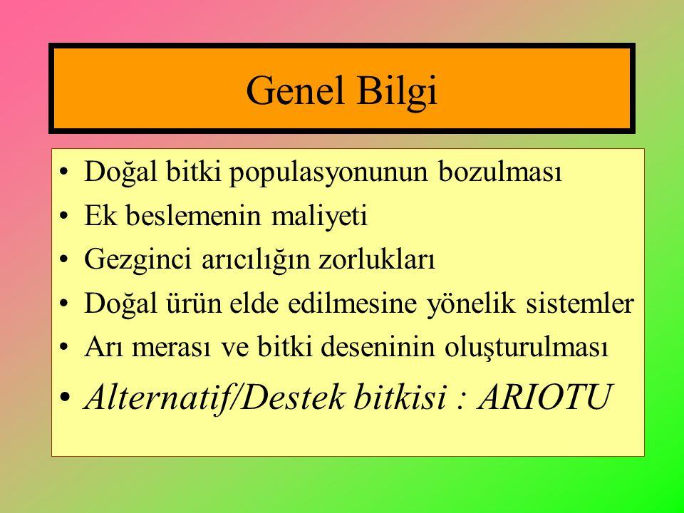Genel Bilgi Alternatif/Destek bitkisi : ARIOTU