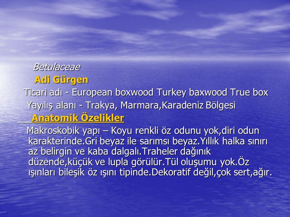 Betulaceae Adi Gürgen. Ticari adı - European boxwood Turkey baxwood True box. Yayılış alanı - Trakya, Marmara,Karadeniz Bölgesi.