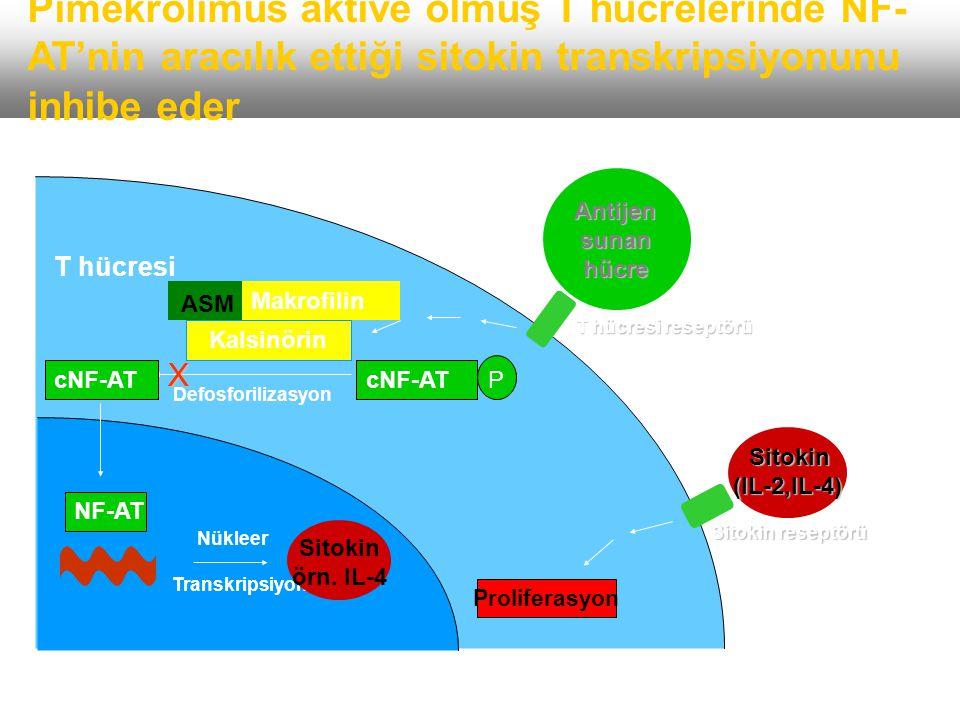 Pimekrolimus aktive olmuş T hücrelerinde NF-AT'nin aracılık ettiği sitokin transkripsiyonunu inhibe eder