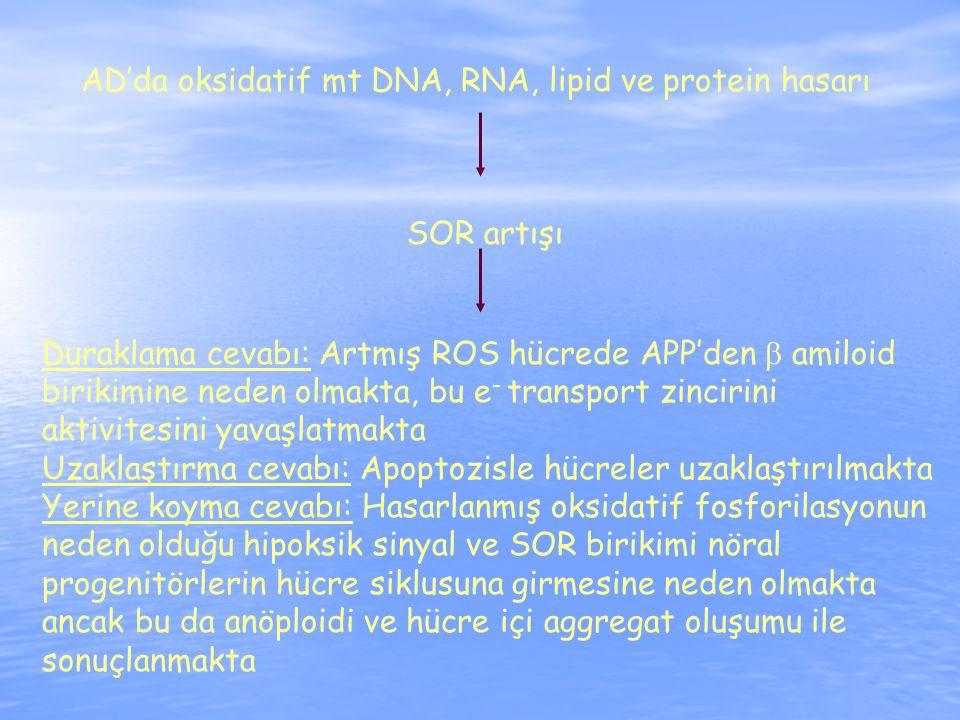 AD'da oksidatif mt DNA, RNA, lipid ve protein hasarı