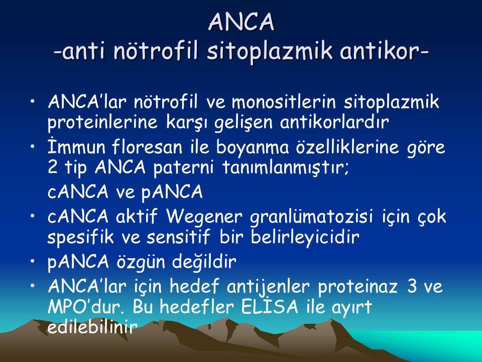ANCA -anti nötrofil sitoplazmik antikor-