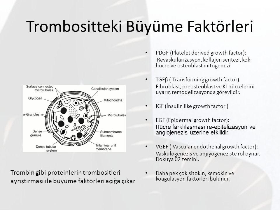 Trombositteki Büyüme Faktörleri