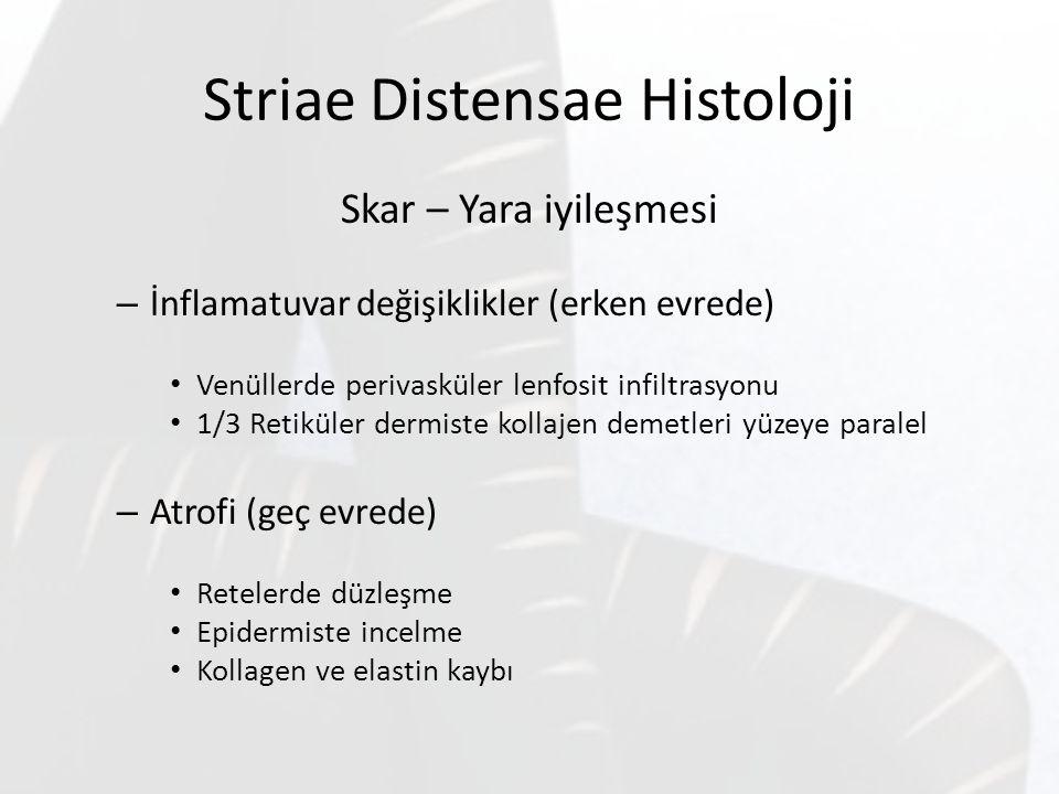 Striae Distensae Histoloji