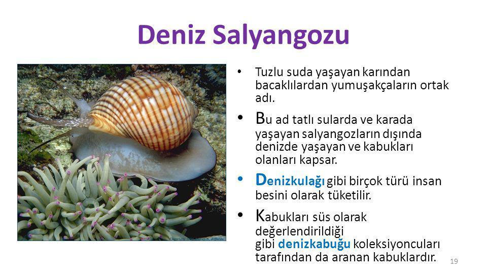 Deniz Salyangozu Tuzlu suda yaşayan karından bacaklılardan yumuşakçaların ortak adı.