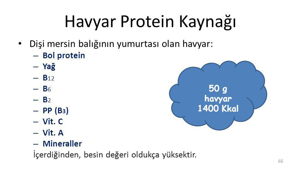 Havyar Protein Kaynağı