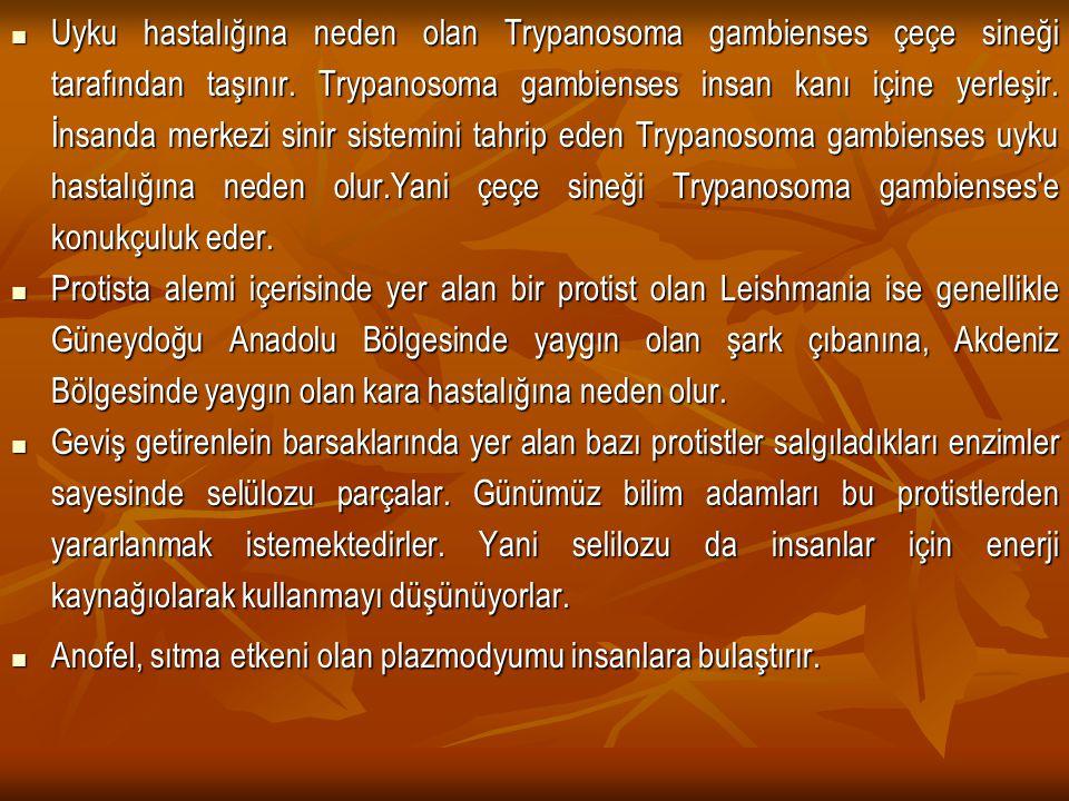 Uyku hastalığına neden olan Trypanosoma gambienses çeçe sineği tarafından taşınır. Trypanosoma gambienses insan kanı içine yerleşir. İnsanda merkezi sinir sistemini tahrip eden Trypanosoma gambienses uyku hastalığına neden olur.Yani çeçe sineği Trypanosoma gambienses e konukçuluk eder.