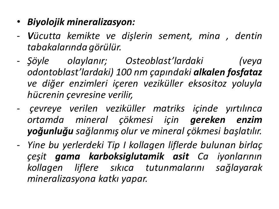 Biyolojik mineralizasyon:
