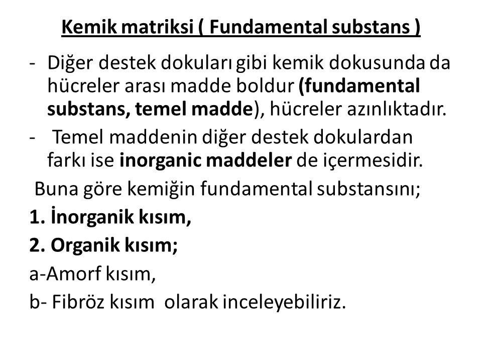 Kemik matriksi ( Fundamental substans )