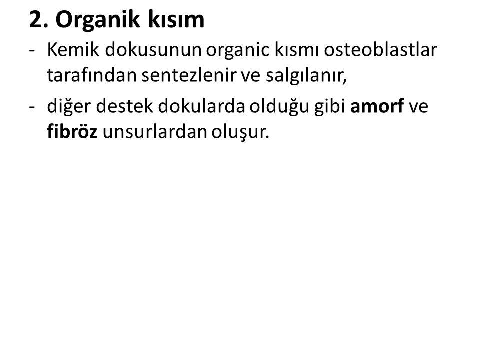 2. Organik kısım Kemik dokusunun organic kısmı osteoblastlar tarafından sentezlenir ve salgılanır,
