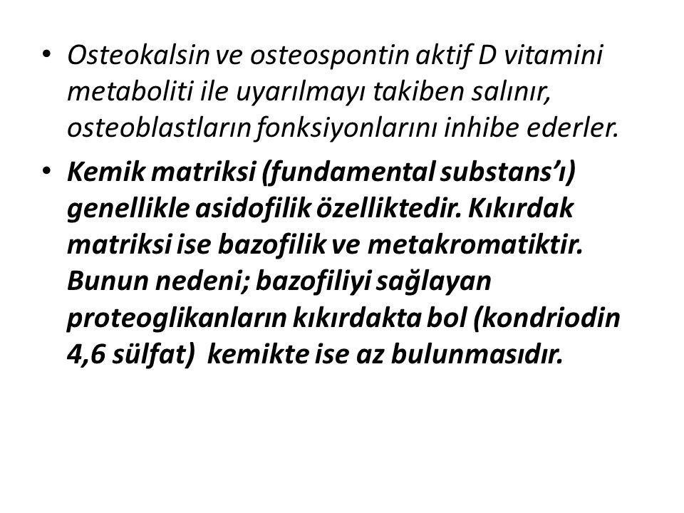 Osteokalsin ve osteospontin aktif D vitamini metaboliti ile uyarılmayı takiben salınır, osteoblastların fonksiyonlarını inhibe ederler.