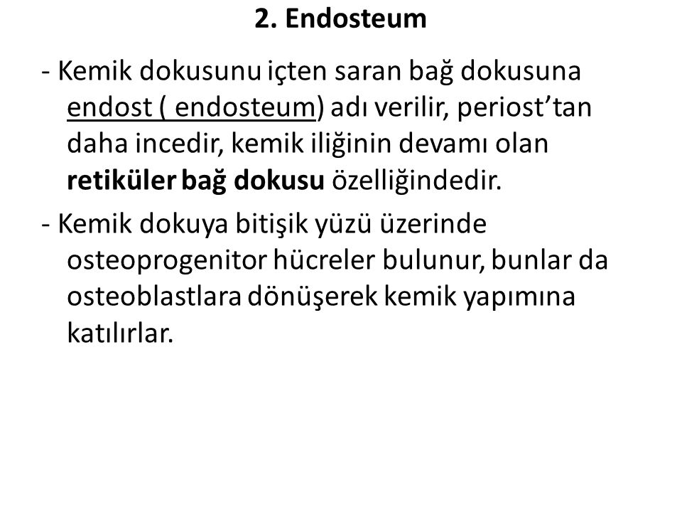 2. Endosteum