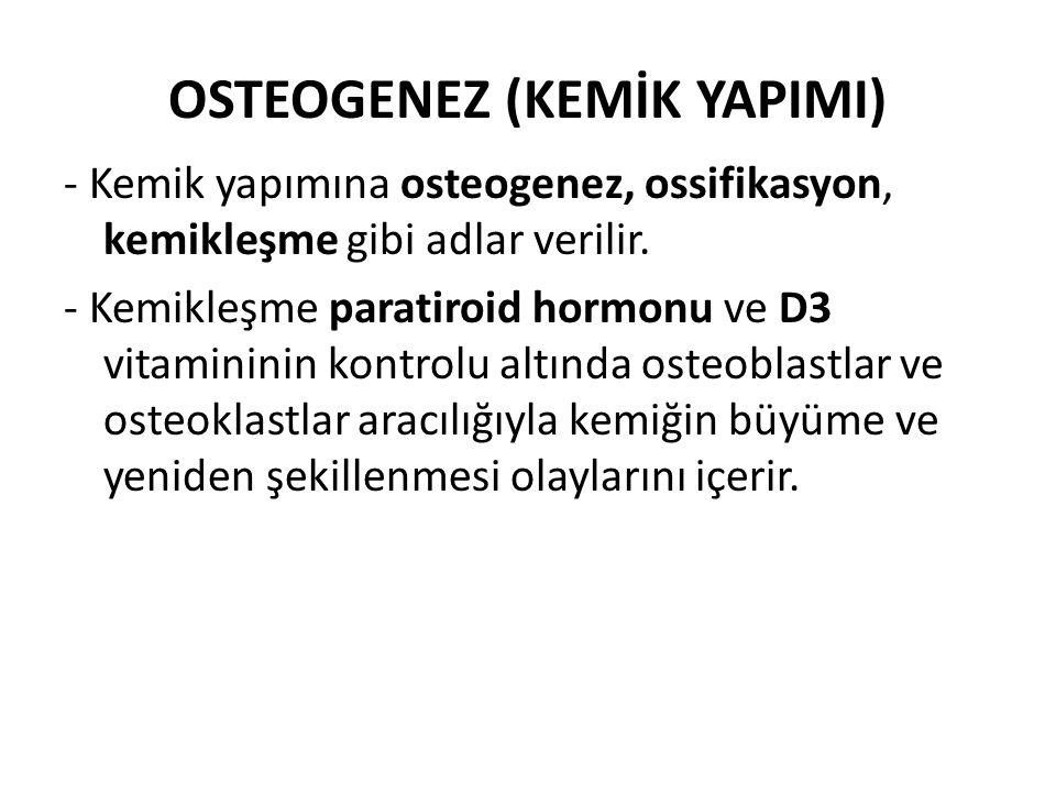 OSTEOGENEZ (KEMİK YAPIMI)