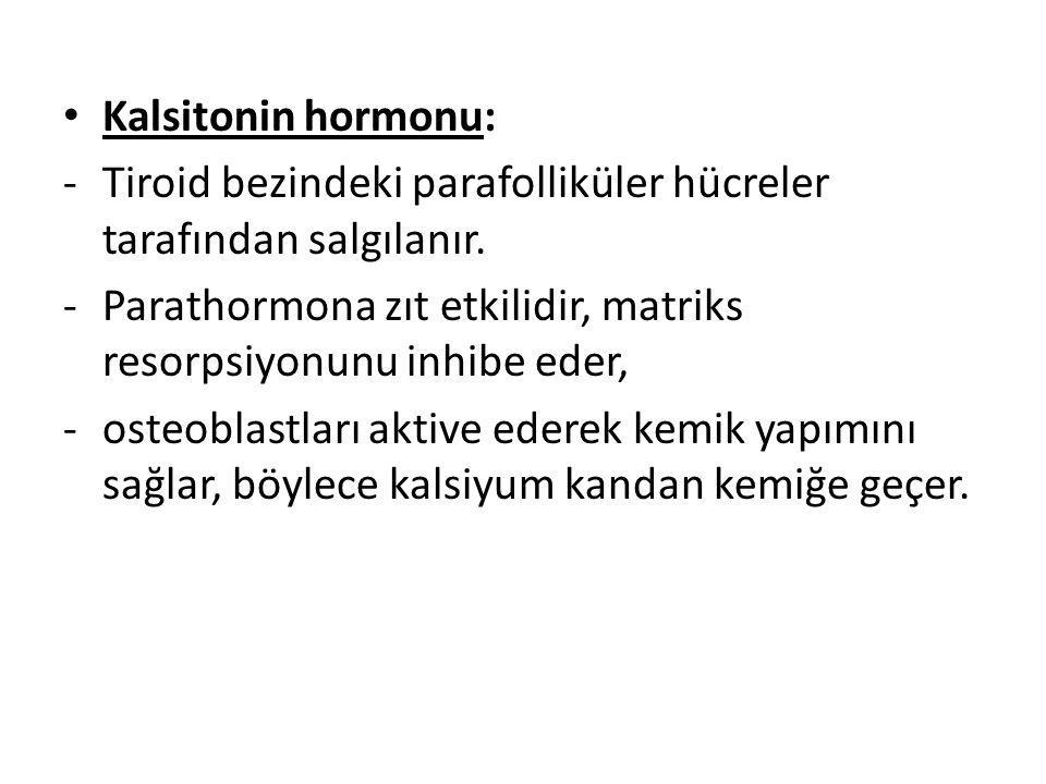 Kalsitonin hormonu: Tiroid bezindeki parafolliküler hücreler tarafından salgılanır. Parathormona zıt etkilidir, matriks resorpsiyonunu inhibe eder,