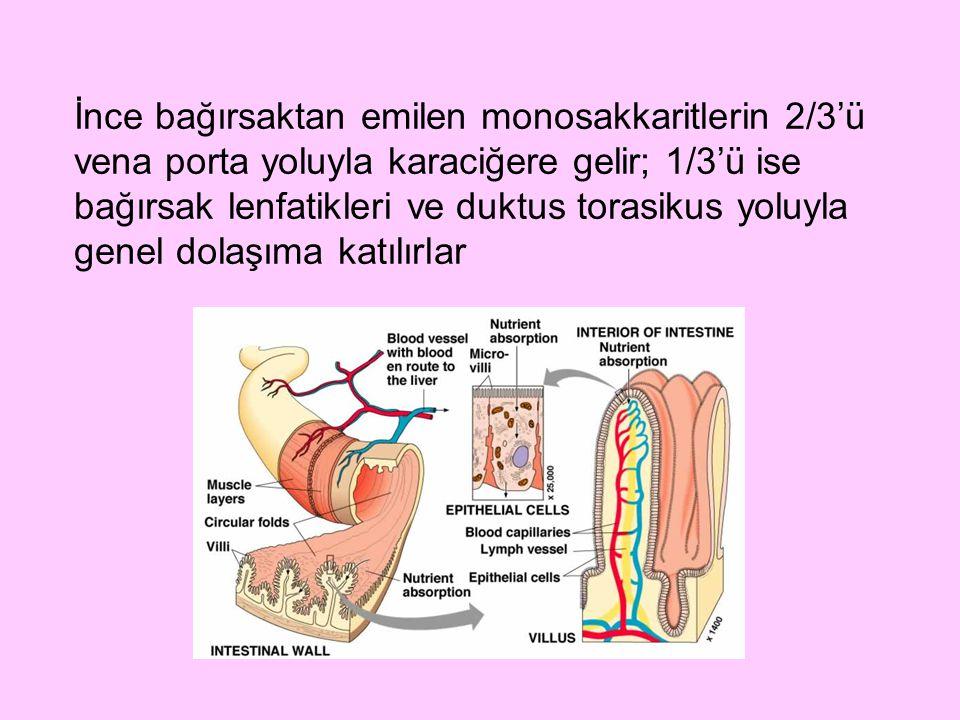 İnce bağırsaktan emilen monosakkaritlerin 2/3'ü vena porta yoluyla karaciğere gelir; 1/3'ü ise bağırsak lenfatikleri ve duktus torasikus yoluyla genel dolaşıma katılırlar
