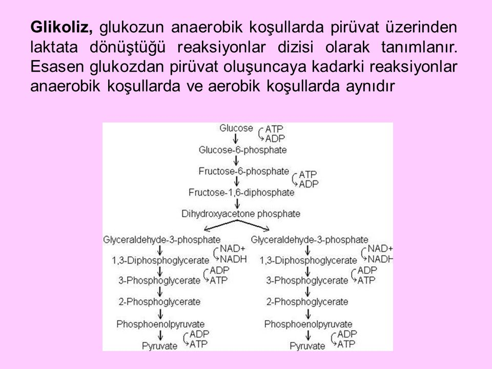Glikoliz, glukozun anaerobik koşullarda pirüvat üzerinden laktata dönüştüğü reaksiyonlar dizisi olarak tanımlanır.