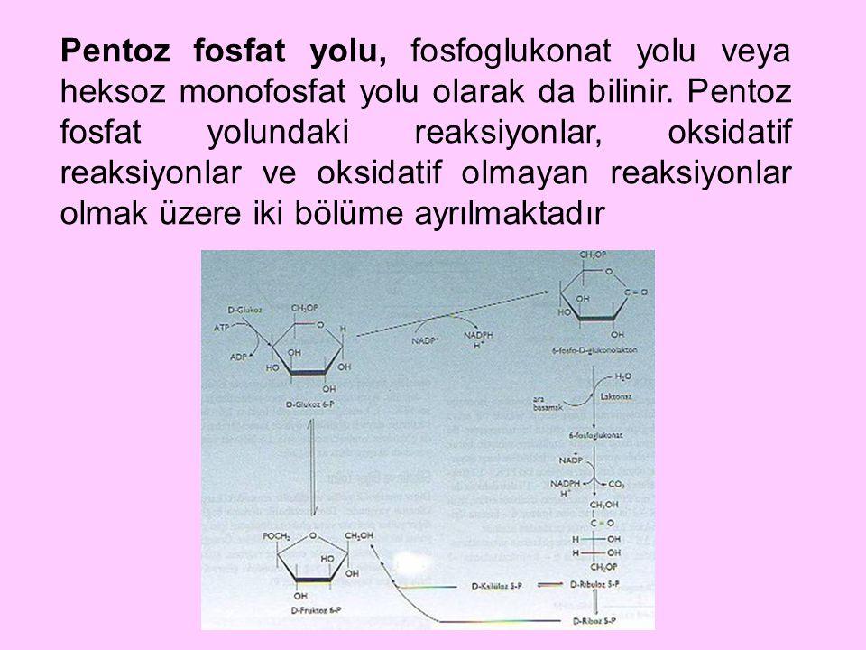Pentoz fosfat yolu, fosfoglukonat yolu veya heksoz monofosfat yolu olarak da bilinir.