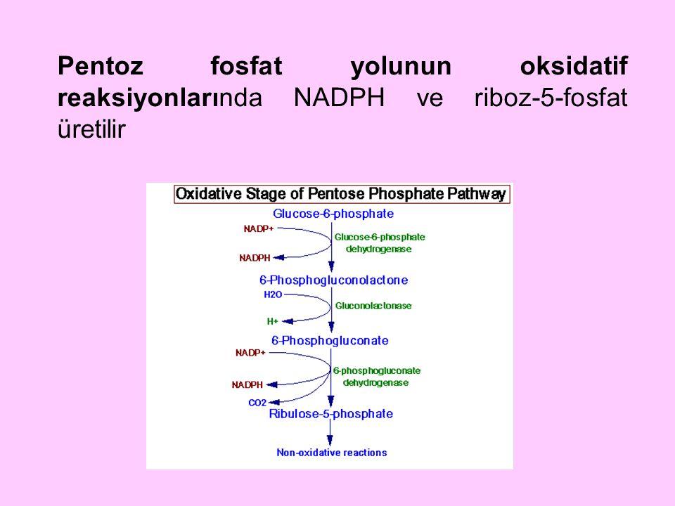 Pentoz fosfat yolunun oksidatif reaksiyonlarında NADPH ve riboz-5-fosfat üretilir