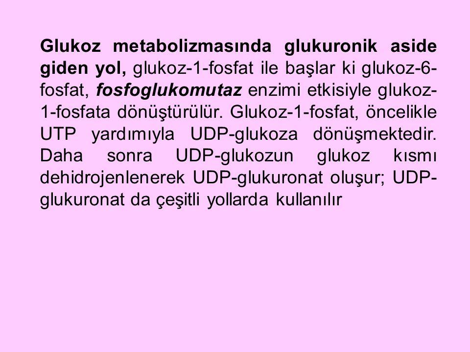 Glukoz metabolizmasında glukuronik aside giden yol, glukoz-1-fosfat ile başlar ki glukoz-6-fosfat, fosfoglukomutaz enzimi etkisiyle glukoz-1-fosfata dönüştürülür.