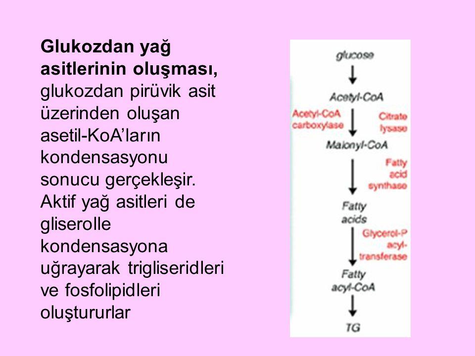 Glukozdan yağ asitlerinin oluşması, glukozdan pirüvik asit üzerinden oluşan asetil-KoA'ların kondensasyonu sonucu gerçekleşir.