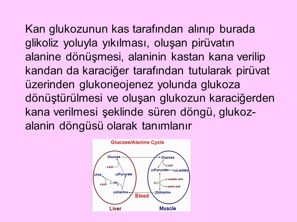 Kan glukozunun kas tarafından alınıp burada glikoliz yoluyla yıkılması, oluşan pirüvatın alanine dönüşmesi, alaninin kastan kana verilip kandan da karaciğer tarafından tutularak pirüvat üzerinden glukoneojenez yolunda glukoza dönüştürülmesi ve oluşan glukozun karaciğerden kana verilmesi şeklinde süren döngü, glukoz-alanin döngüsü olarak tanımlanır