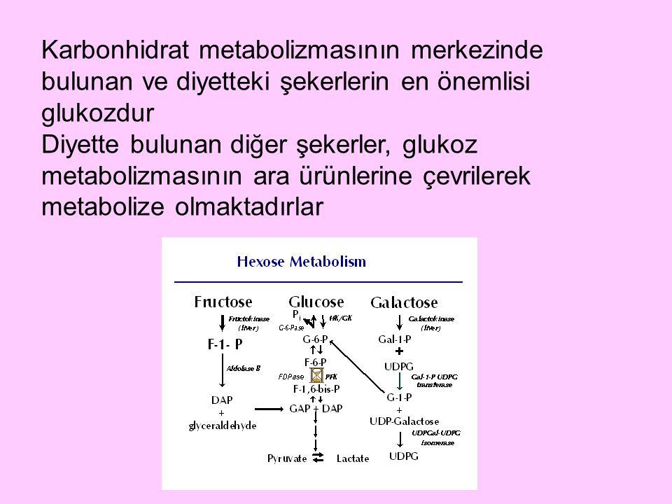 Karbonhidrat metabolizmasının merkezinde bulunan ve diyetteki şekerlerin en önemlisi glukozdur