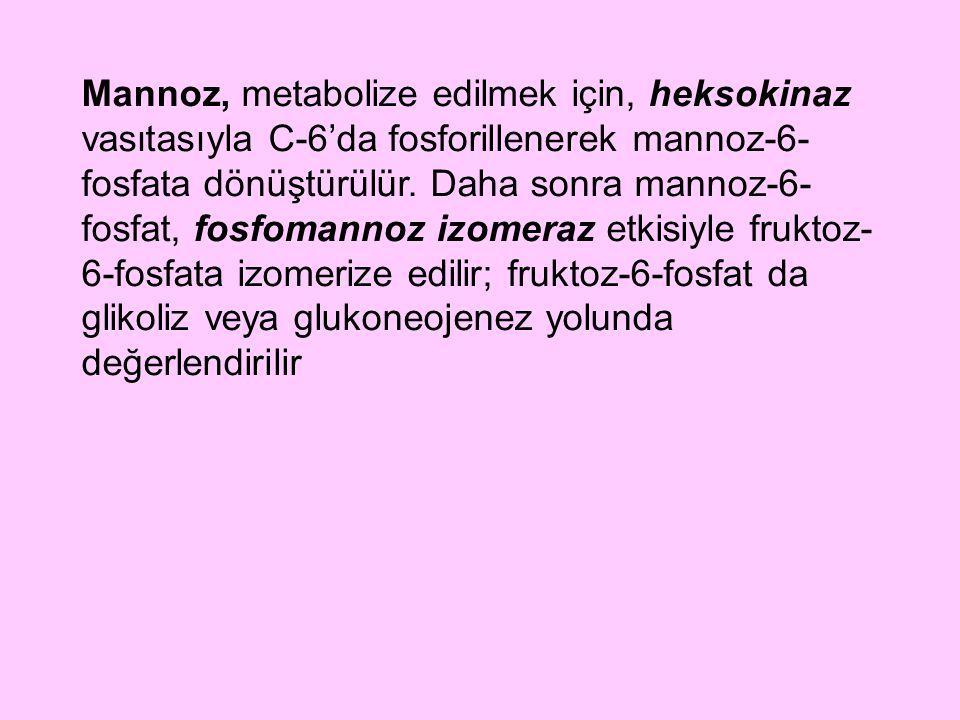 Mannoz, metabolize edilmek için, heksokinaz vasıtasıyla C-6'da fosforillenerek mannoz-6-fosfata dönüştürülür.