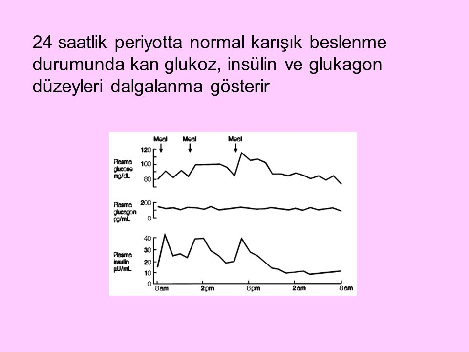 24 saatlik periyotta normal karışık beslenme durumunda kan glukoz, insülin ve glukagon düzeyleri dalgalanma gösterir