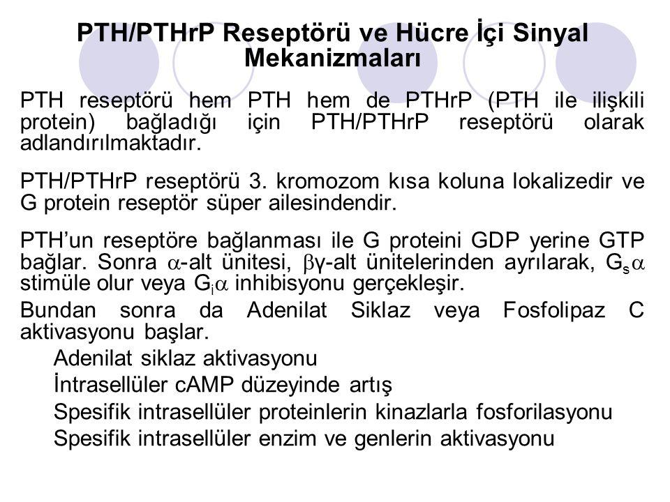 PTH/PTHrP Reseptörü ve Hücre İçi Sinyal Mekanizmaları