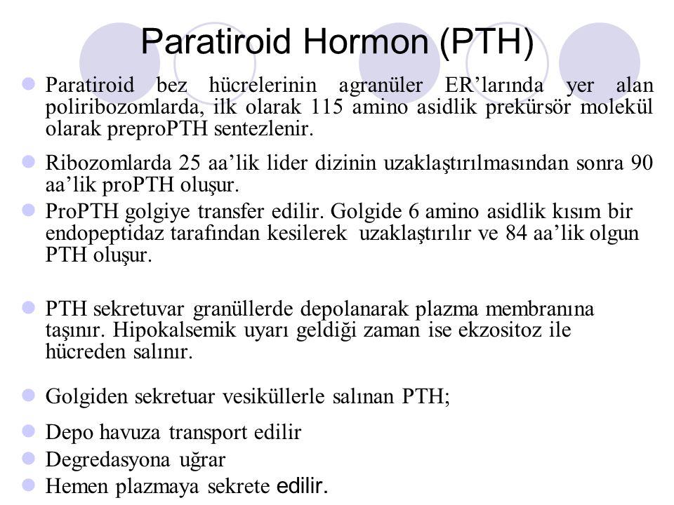 Paratiroid Hormon (PTH)
