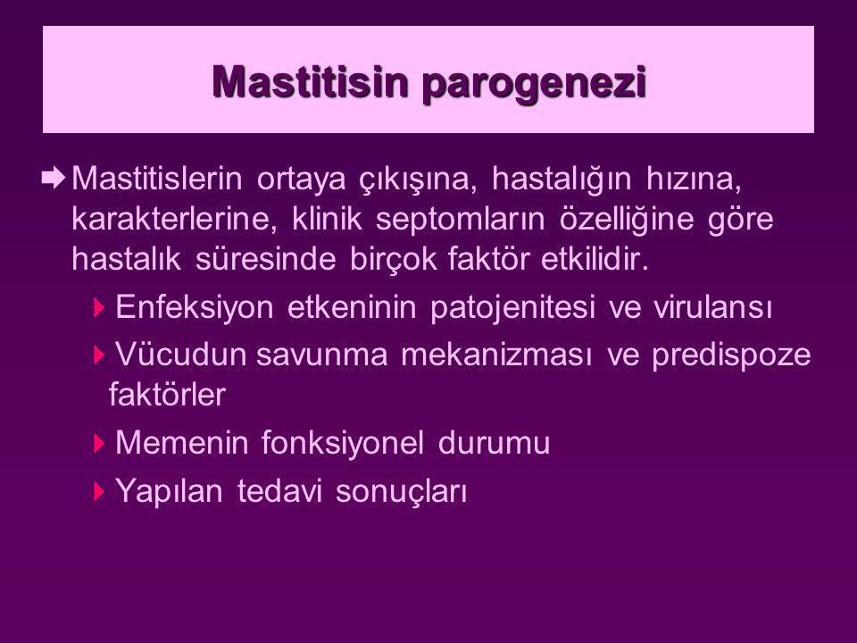 Mastitisin parogenezi