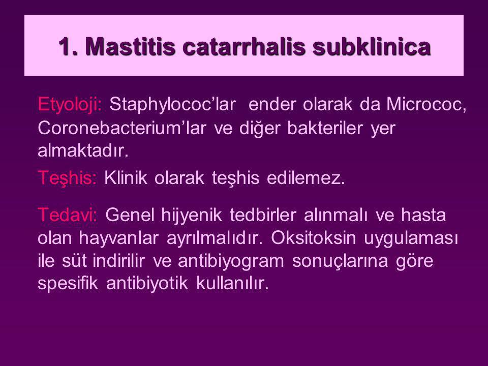 1. Mastitis catarrhalis subklinica
