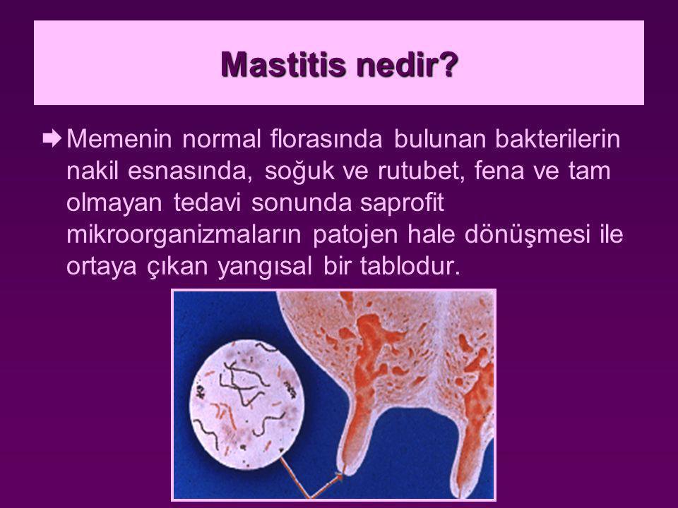 Mastitis nedir